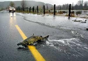 Un salmón cruza una carretera tras un golpe de mar