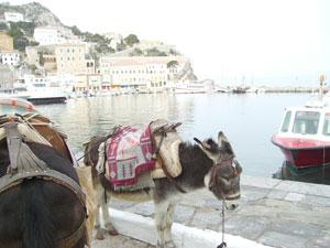 Los burros son el medio de transporte en la isla