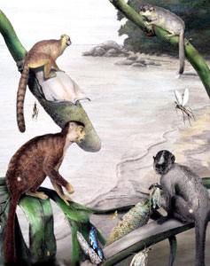 Una ilustración del Museo Carnagie de Historia Natural con los antropoides hallados