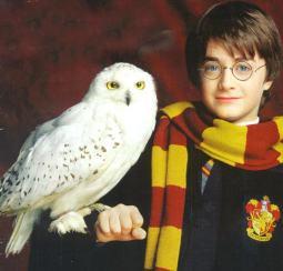 El mago Harry Potter, con su famosa lechuza blanca