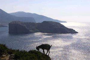 Una cabra dibuja su perfil delante de la Isla Perejil