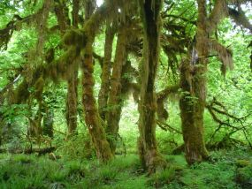 Un bosque lluvioso propio de América del norte