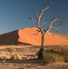 El colorido de las dunas en Sossusvlei es impactante