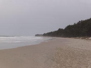 Los pinos caracterizan la playa de Diembéring